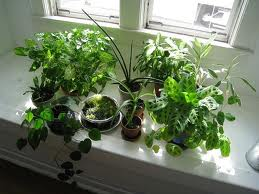 Houseplants, ID, Insects, Repotting, Etc @ Justice Center | Monroe | Wisconsin | United States
